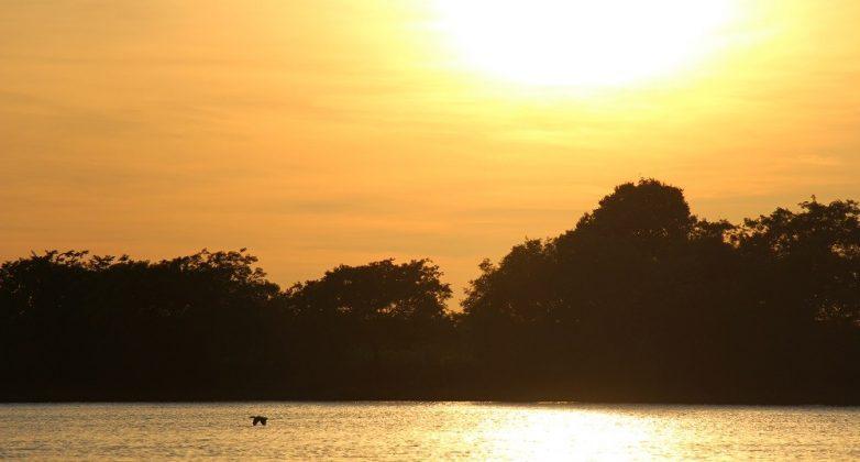 Projeto de Lei do Pantanal é oportunidade de promover o desenvolvimento sustentável