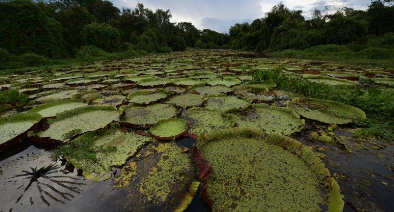 Chaves para entender o Pantanal
